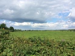 Lush pasture near Rathcabbin