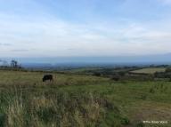 Lush green pastures around Ardagh Co Limerick