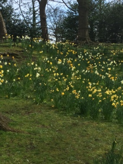 The daffodils were glorious...